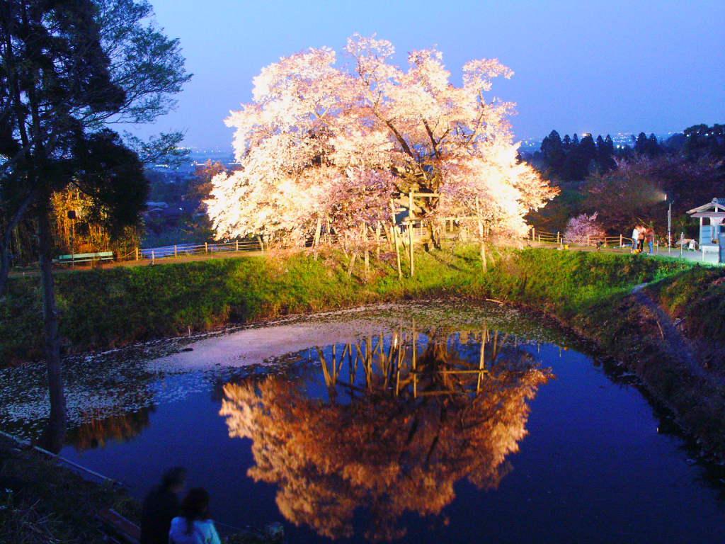 無料壁紙写真素材集 4月 春 花 桜 夜桜