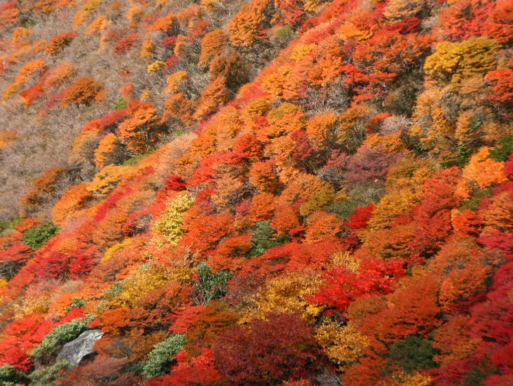 無料壁紙写真素材集 紅葉 樹木 秋 10月 山岳 三俣山 大分県